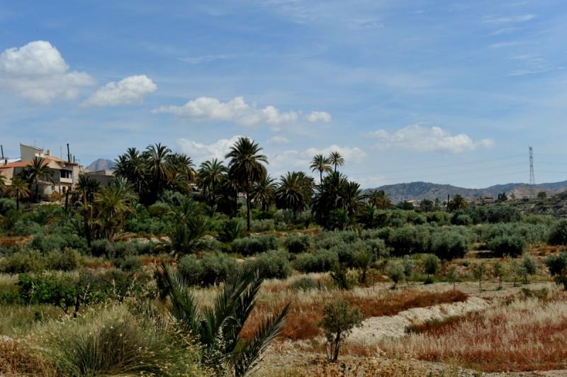 Property in Abanilla