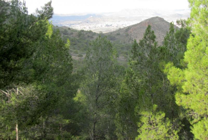 Walking in Sierra de Santa Ana in Jumilla