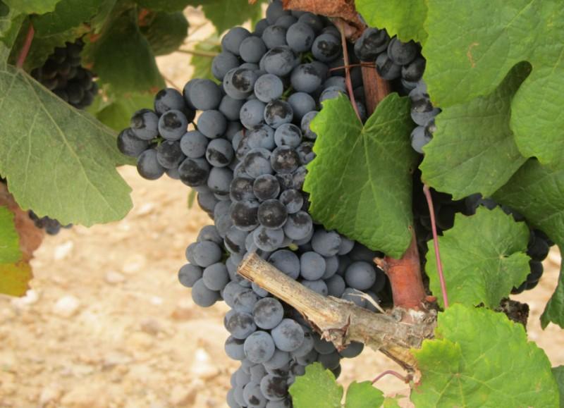 Jumilla wine route, Bodegas Juan Gil