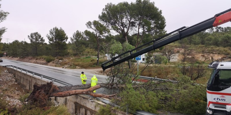 <span style='color:#780948'>ARCHIVED</span> - Jumilla-Pinoso RM-247 re-opens as fallen tree is cleared