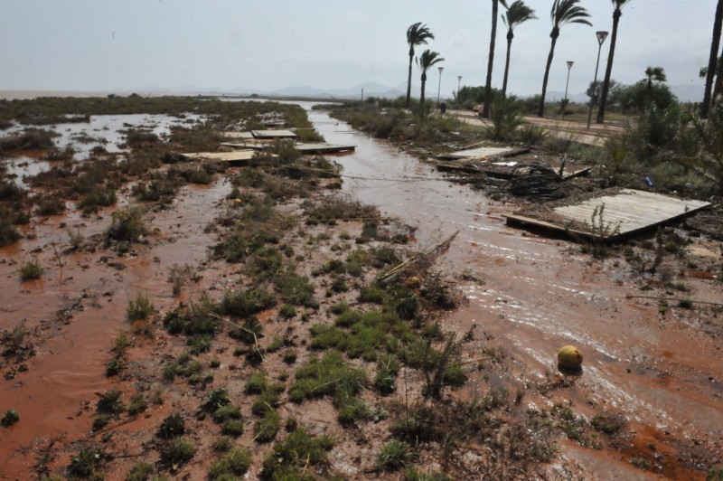 <span style='color:#780948'>ARCHIVED</span> - Reforestation plan to minimize runoff in the Mar Menor
