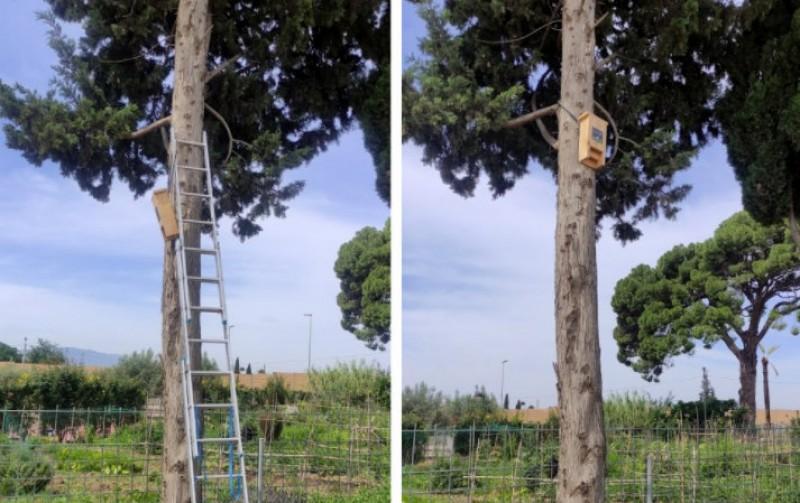 <span style='color:#780948'>ARCHIVED</span> - Bat nesting box and shelter installed at Espinardo environmental education park