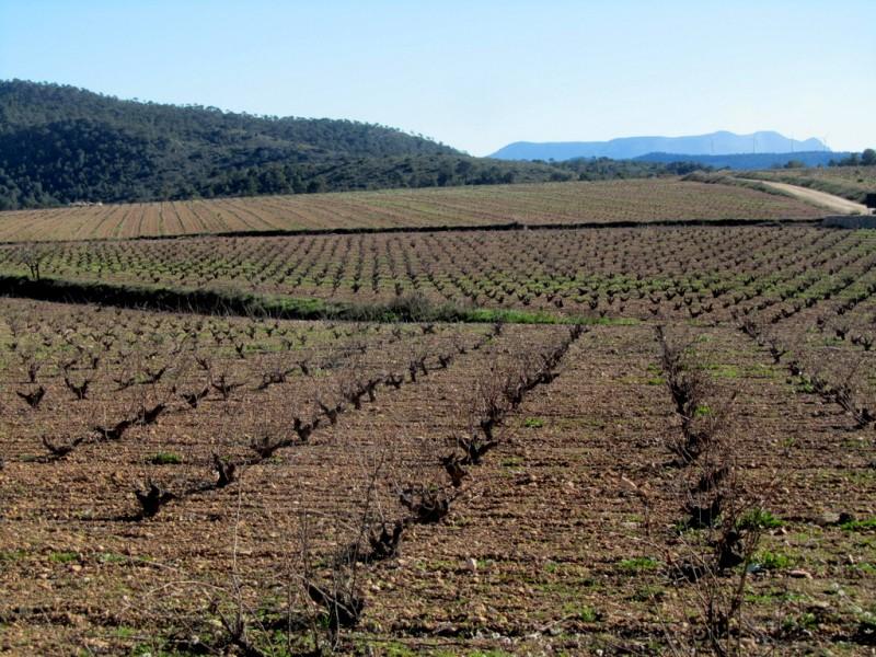 Jumilla wine route, Bodega Xenysel