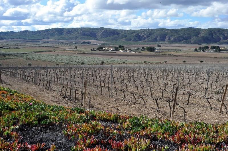 Jumilla wine route, Bodegas Hacienda del Carche
