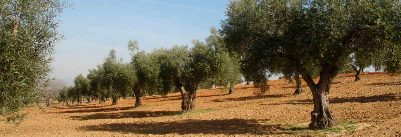 Jumilla wine route, Olimendros olive oil press